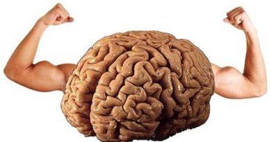 Beynimizin Patronu Sürüngen Beynin Özellikleri