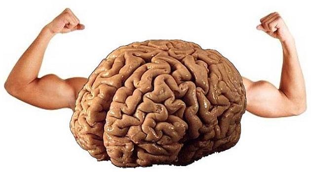 surungen-beyin-nedir-ozellikleri-nelerdir